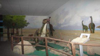 Photo of المتحف العلمي: يكشف الكنوز الجيولوجية الفريدة وثروات اليمن