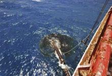 Photo of منظمة حقوقية تناشد المجتمع الدولي بسرعة إنقاذ التنوع البيئي في منطقة البحر الأحمر