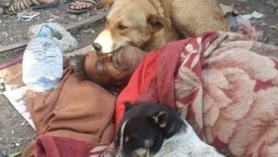 Photo of مشهد وداع مؤثر .. كلاب ضالة تحتضن مشرداً في إب بعد مفارقته الحياة